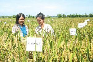 Ứng dụng phát triển cây trồng thích ứng với biến đổi khí hậu ở vùng đồi núi Bắc Trung Bộ