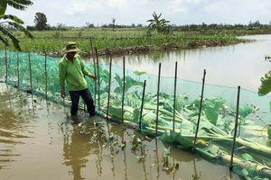 Nuôi cá thay thế lúa vụ 3 mùa nước nổi cho thu nhập cao