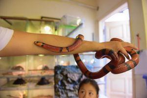 Rợn người xem chàng trai Hà thành đùa chơi với đàn trăn, rắn quý hiếm