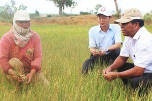 Chuyện lạ ở Đắk Lắk: Gặp hạn giữa mùa mưa
