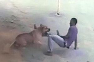 Kinh hoàng béc giê tấn công chó hung hãn để bảo vệ người đi đường
