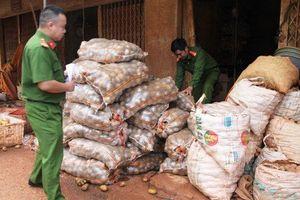 Dùng đất đỏ Đà Lạt 'hóa kiếp' cho khoai tây Trung Quốc