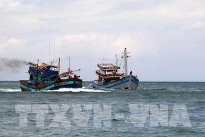 Đã xác minh thông tin tàu Hải Dương 19 đâm chìm tàu cá Bình Thuận