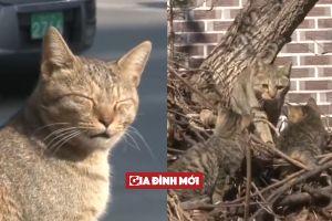 Câu chuyện buồn rơi nước mắt của mèo mẹ Sinja và 3 chú mèo con