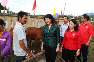 Trao 55 con bò giống cho đồng bào nghèo tỉnh Quảng Ngãi