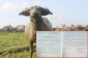 Chăn thả trâu bò phải đóng phí ở Quảng Bình: Huyện lập đoàn kiểm tra