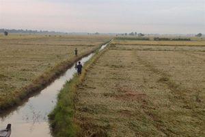 An Giang: Hơn 14.580 ha lúa ngập úng
