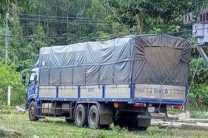 Xe tải vận chuyển hơn 1 tấn gỗ trắc ngụy trang với gỗ mít