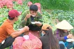 VIDEO: Nông sản Trung Quốc nhái Đà Lạt: 'Giết chết' nông dân