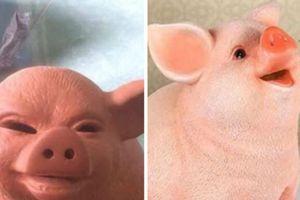Mua lợn đất theo hình trên mạng, cô gái ngao ngán khi nhận được sản phẩm khiến ai cũng bật cười