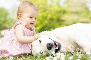 Những nguy hại không lường từ việc nuôi thú cưng bạn nhất định phải biết