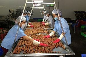 Xuất khẩu trái cây: Lợi thế mong manh