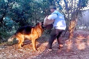Hà Nội: Người đàn ông bị chó nhà nuôi cắn đã tử vong