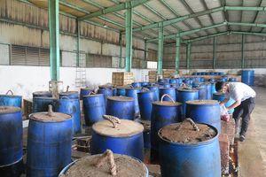 Phát hiện cơ sở sản xuất ớt muối có lẫn xác côn trùng tại TP.HCM