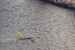 Cá sấu tinh quái, dùng phao bơi qua kênh đào