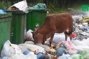 Quảng Ngãi cầu cứu Bộ TN&MT vụ dân chặn nhà máy rác