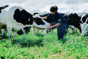 42 năm hoạt động, Vinamilk chiếm 50% thị phần sữa Việt