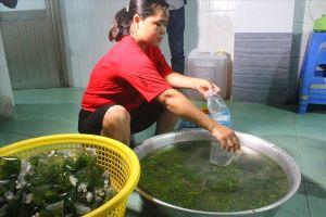 Một cơ sở cung cấp hàng trăm suất ăn mỗi ngày vi phạm các quy định vệ sinh thực phẩm