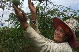 Làm giàu ở nông thôn: Trồng 'ngọc xanh' trên núi đất, lãi nửa tỷ đồng
