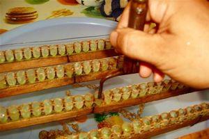 Quy trình khai thác sữa ong chúa 'chuẩn' nhất của Ong Tam Đảo