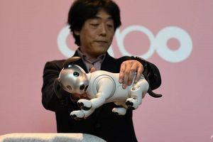 Sony tung chó con robot hỗ trợ AI ở Mỹ
