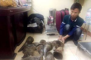 Chung tay đưa Việt Nam ra khỏi 'danh sách đen' tiêu thụ sừng tê giác