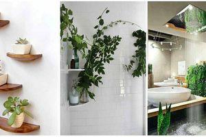 Mách bạn cách lựa chọn những loại cây dễ trồng, dễ chăm trong nhà tắm
