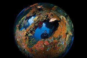 Mãn nhãn với vẻ đẹp diệu kỳ từ thế giới đại dương qua cuộc thi ảnh 'Through Your Lens'