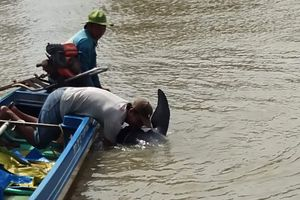 Kiên Giang: Giải cứu thành công một con cá heo