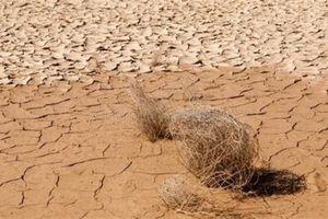 Trung Đông: cuộc chiến khốc liệt vì nguồn nước