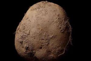 Chụp ảnh củ khoai tây, có ngay gần 30 tỷ đồng