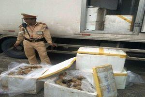Bắt giữ hơn 3 tạ nội tạng bò thối vận chuyển vào Đà Nẵng tiêu thụ