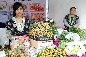Sơn La: Phấn đấu xuất khẩu 10 tấn nhãn Sông Mã