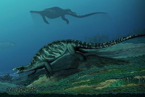 Phát hiện hóa thạch rùa 228 triệu năm không có mai, mảnh ghép mới của bài toán tiến hóa