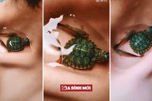 Hết nuôi cá, dân mạng lại chuyển sang nuôi rùa trên xương quai xanh để khoe độ mảnh mai