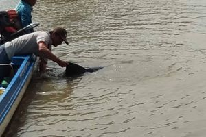Giải cứu thành công con cá heo nặng 150kg trôi dạt gần bờ