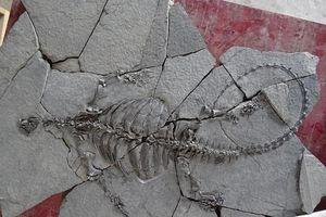 Phát hiện hóa thạch rùa tiền sử khổng lồ ở Trung Quốc