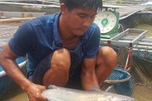 Nam Định: Ra giữa sông Hồng nuôi cá, 'liều ăn hơi nhiều' tí thôi