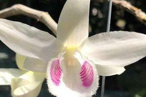 Đại gia Hòa Bình sẵn sàng chi 2,7 tỷ để có loài hoa lan độc, đẹp này