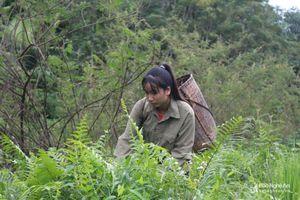 Bố mẹ mất khả năng lao động, cô trò nghèo gác lại ước mơ đại học