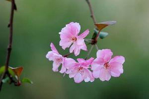 Em nhành hoa dại