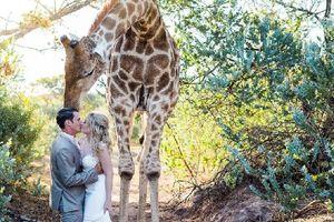 Phát sốt với 'kẻ phá đám' trong bộ ảnh cưới siêu đáng yêu