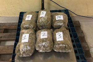TP.HCM: 8 tháng bắt giữ 57kg cần sa từ nước ngoài về Việt Nam