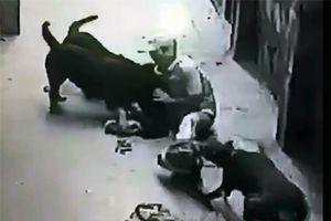Khi thú cưng biến thành kẻ 'sát nhân'