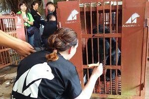 Một người dân bàn giao 5 con gấu ngựa được nuôi 15 năm để bảo tồn