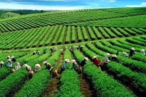 Các hợp tác xã sản xuất nông nghiệp tiếp cận nguồn vốn khiêm tốn