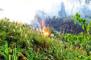 Khánh Hòa: Khoảng 100 ha rừng phòng hộ bị cháy trong thời tiết khô hanh