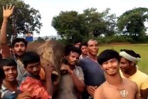 Hàng trăm dân làng tập trung cứu chú voi con đang thoi thóp