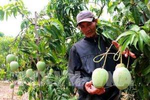 Tiền Giang phát huy lợi thế cạnh tranh từ các cây đặc sản
