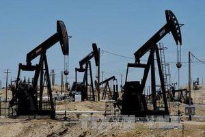 Xuất khẩu dầu của Mỹ sang Trung Quốc giảm: Hệ quả chính trị hay câu chuyện kinh tế